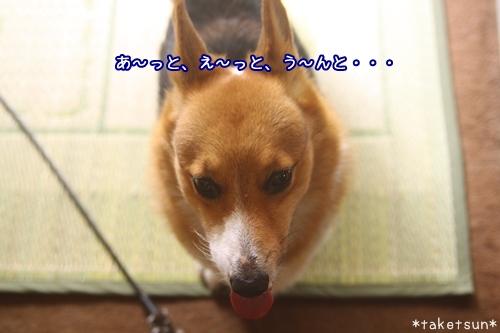 003_20090925085259.jpg
