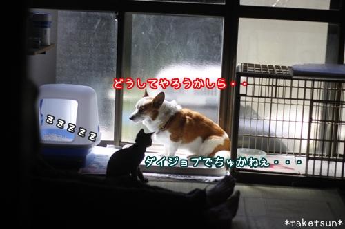 006_20091008130059.jpg