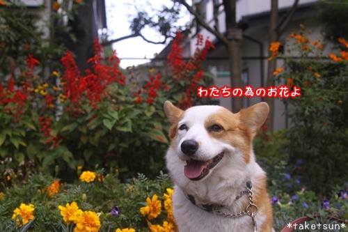 008_20091001145100.jpg