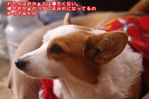 008_20091112171702.jpg