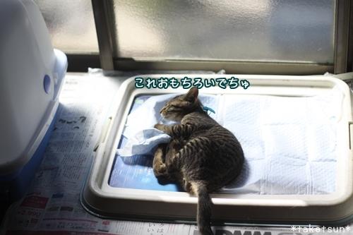 010_20091008130059.jpg