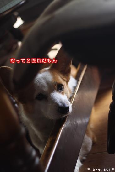 017_20091008130147.jpg