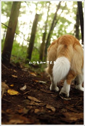 018_20111023195743.jpg