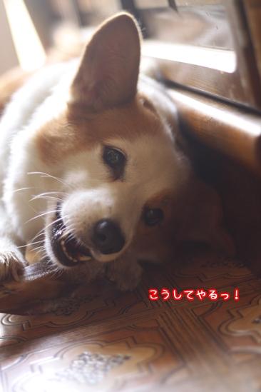 030_20091029195829.jpg