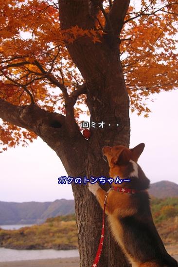 039_20091105210116.jpg