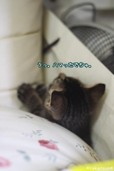059_20090815212042.jpg