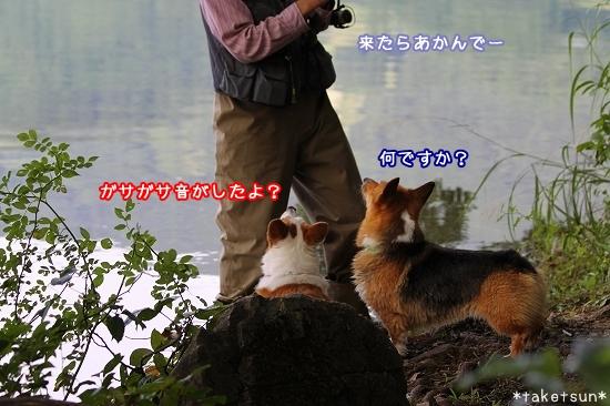 072_20090825202306.jpg