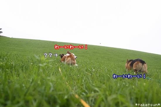 084_20090803150719.jpg