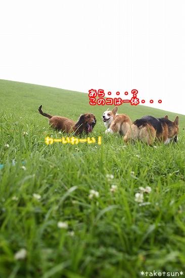 086_20090803150719.jpg