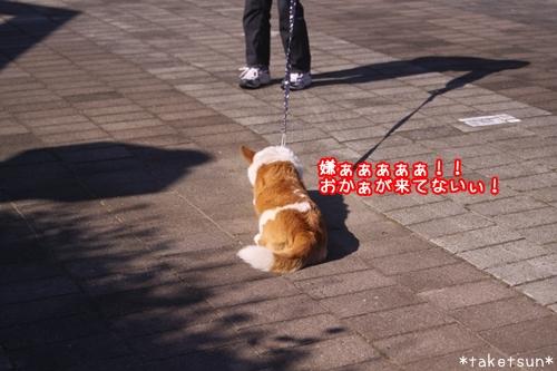 119_20091016093945.jpg