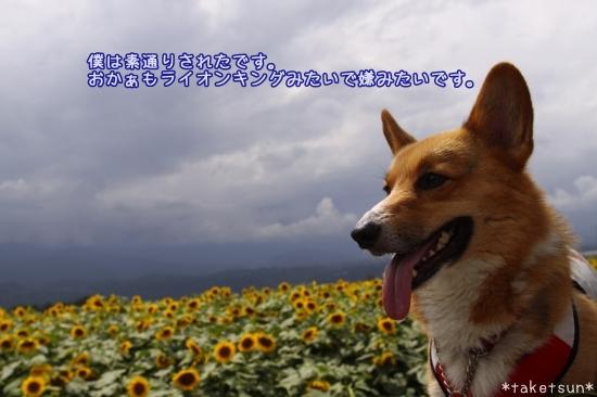 276_20090808143754.jpg