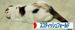 ばなーIMG_1644