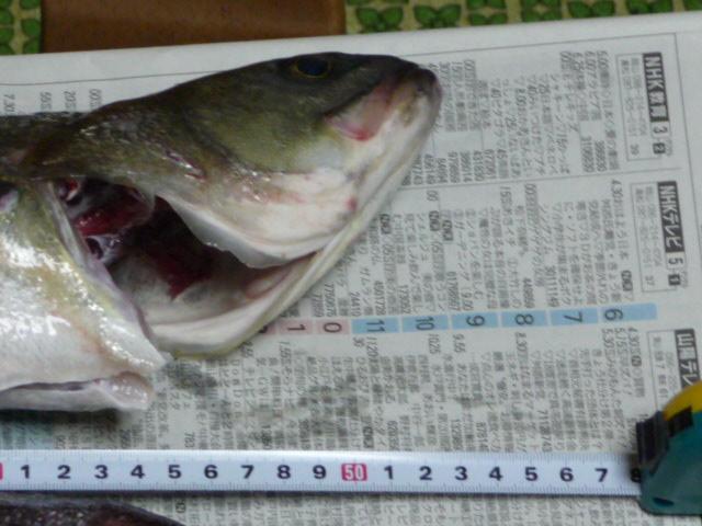 fishing 007