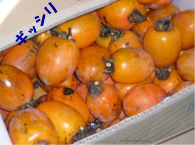 柿ぎっしり