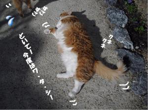 鈴娘 コロコロ