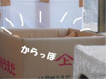 からっぽの段ボール箱