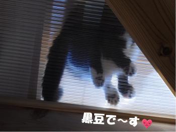カナ 黒豆ちゃん