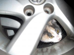 タイヤの中