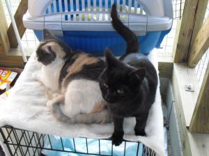 雪と舞 猫舎