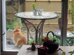雨の日 庭へ