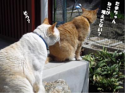 猫が増えてない?
