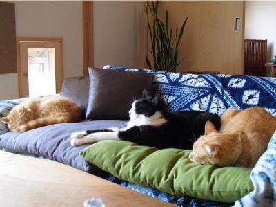 ソファの上で半分猫だんご