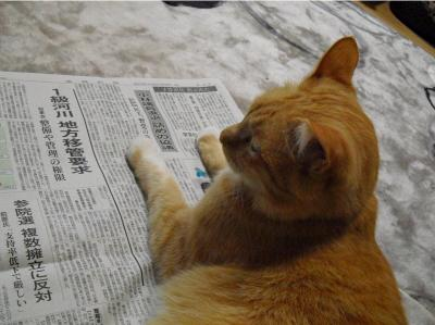 もどきと新聞
