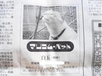 新聞の白玉