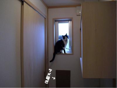 窓辺のカナ