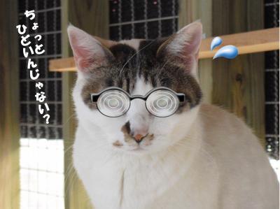 メガネのうらら