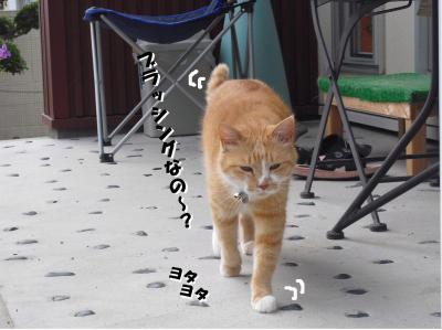 小町ヨタヨタ