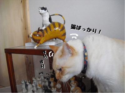 猫ばっかり