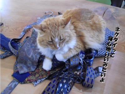 ネクタイって寝心地いいのよ