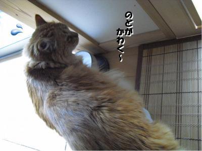 のどが渇く~!
