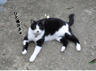 シャチ猫 カナ