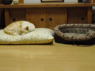 猫ベッドは使わないよ