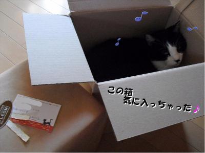 この箱気に入っちゃった!