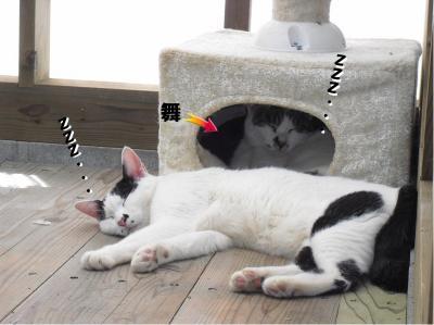 猫タワーのボックス