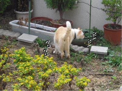 庭をパトロール