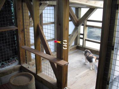 猫舎小部屋のフェンス面