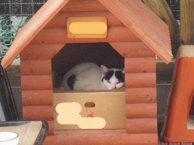 猫小屋にひとり
