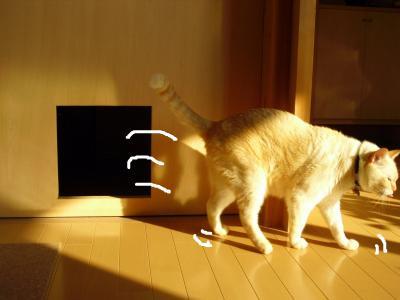 猫穴付き扉