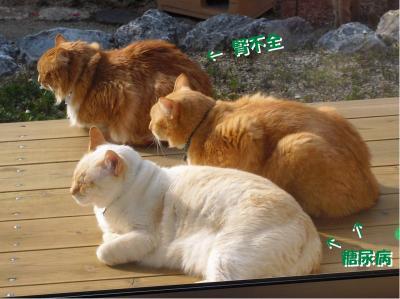 ガンバレ! 3猫!!