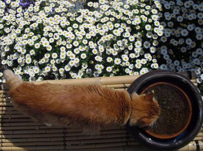 花畑のお水