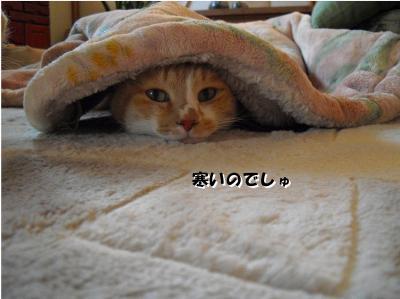 寒いのでしゅ