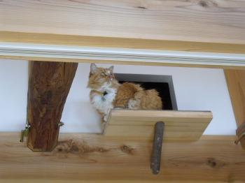 鈴娘ちゃん 猫穴