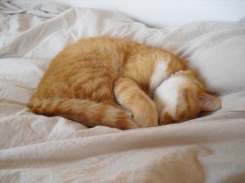 小町 ベッドでお昼寝