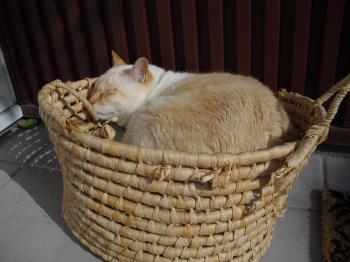 白玉 籠でお昼寝