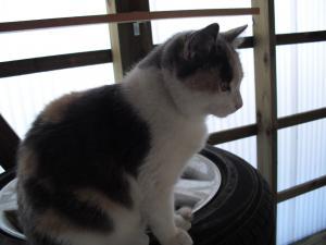 タイヤの上の雪