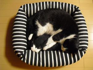 カナ 猫ベッド